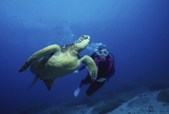 Cayman's Top Dive Sites: Part 1